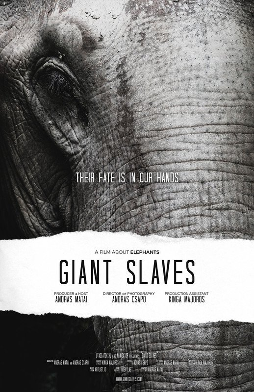 Giant Slaves – Elephants in tourism industry